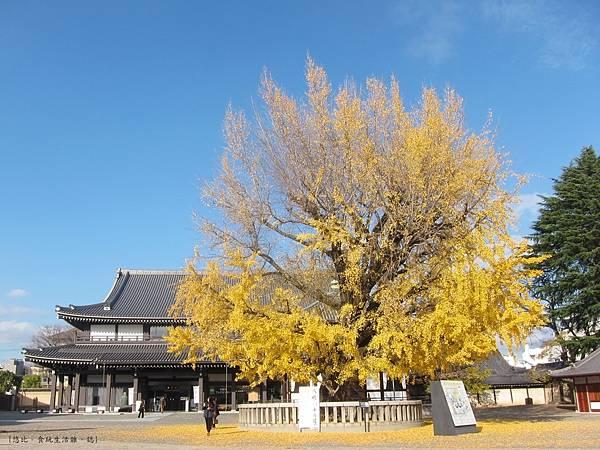 西本願寺-阿彌陀堂前銀杏-1.JPG