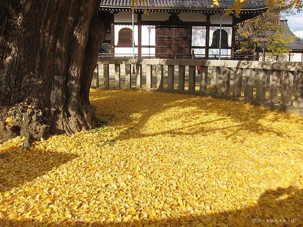 西本願寺-阿彌陀堂前銀杏地毯-1.JPG