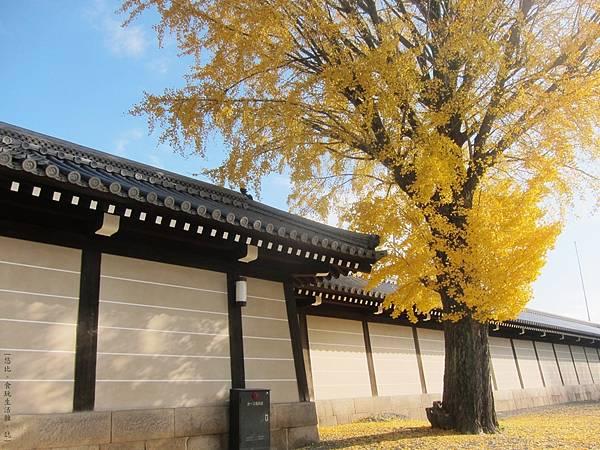 西本願寺-御影堂門銀杏-1.JPG
