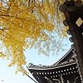 西本願寺-御影堂門銀杏-6.JPG