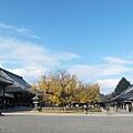 西本願寺-御影堂前大銀杏-1.JPG