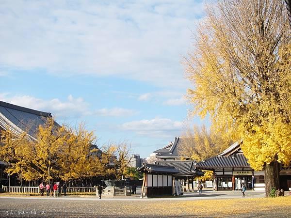 西本願寺-銀杏全.JPG