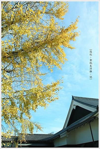 熊本城-大銀杏-7.JPG