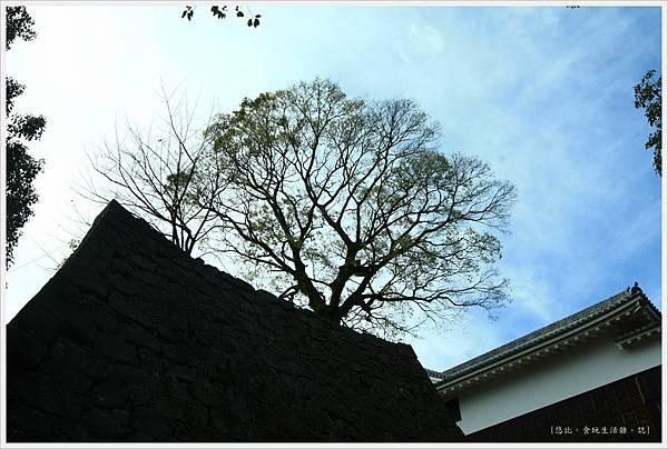 熊本城-櫨群-2.JPG