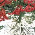 涉成園-印月池侵雪橋紅葉-2.JPG