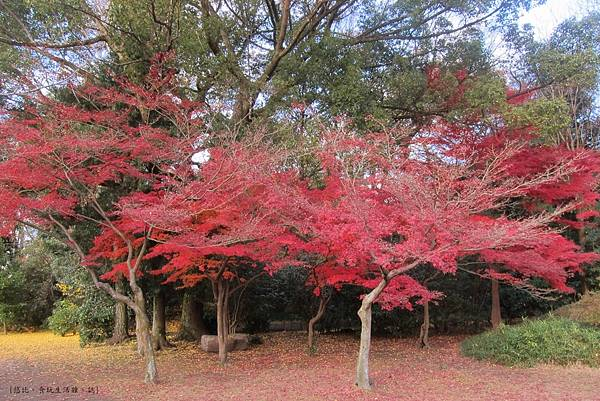 涉成園-楓樹紅葉-2.JPG
