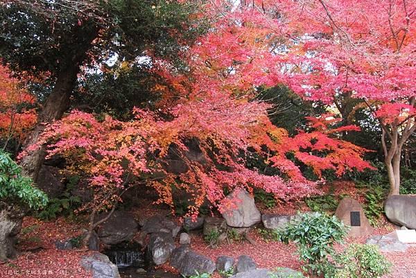 涉成園-楓樹紅葉-3.JPG