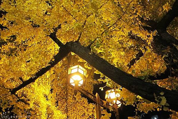 大阪-黃燈區-2.JPG