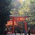 下鴨神社-1.JPG