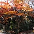 下鴨神社-4.JPG