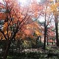下鴨神社-糾之森-2.JPG