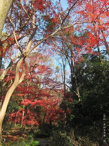 下鴨神社-糾之森-6.JPG