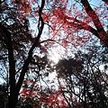 下鴨神社-糾之森-5.JPG