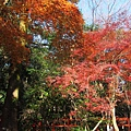 下鴨神社-表參道-1.JPG