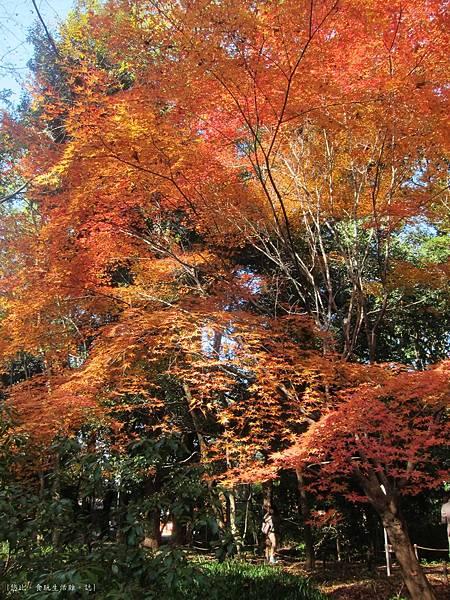下鴨神社-表參道-2.JPG