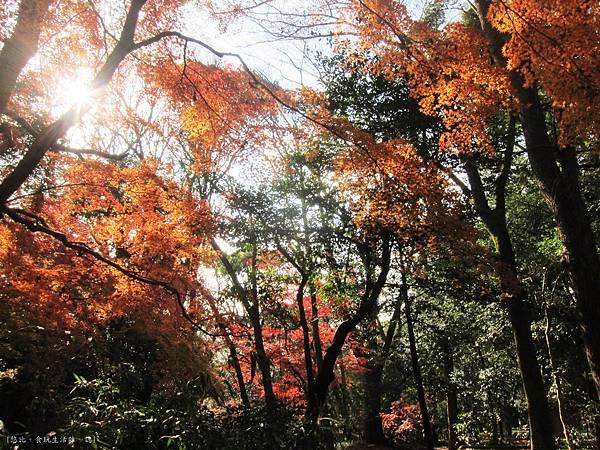 下鴨神社-表參道-3.JPG