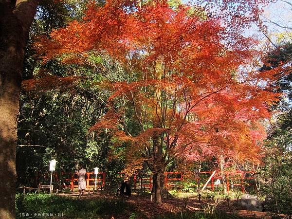 下鴨神社-表參道-4.JPG