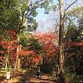 下鴨神社-表參道-5.JPG