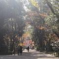 下鴨神社-表參道-6.JPG