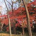下鴨神社-表參道-8.JPG