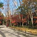 下鴨神社-表參道-10.JPG
