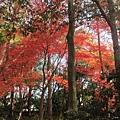 下鴨神社-表參道-11.JPG