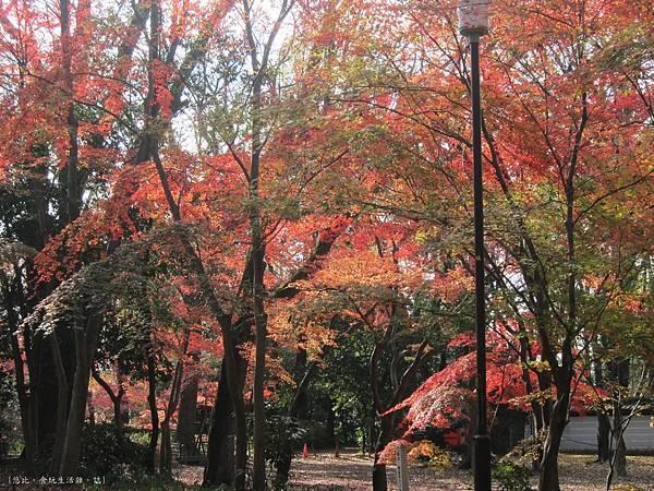 下鴨神社-表參道-13.JPG