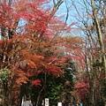 下鴨神社-表參道-17.JPG