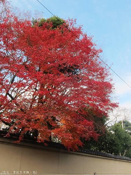 下鴨神社-鳥居前.JPG
