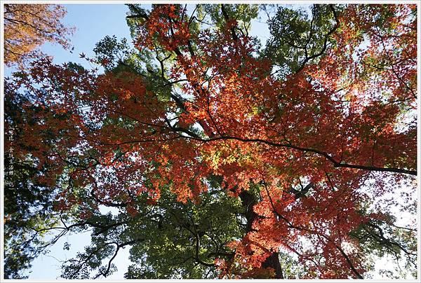 川越-喜多院-五百羅漢-5.JPG