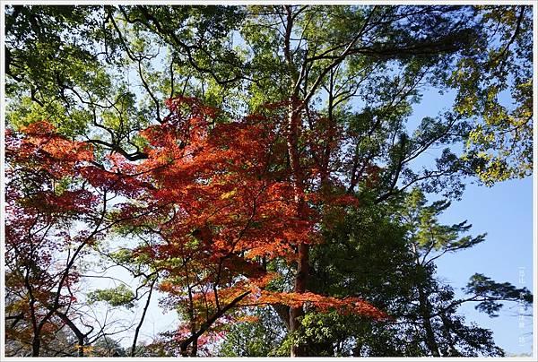 川越-喜多院-五百羅漢-6.JPG