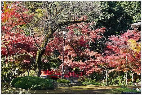 川越-喜多院-紅葉山庭園-14.JPG