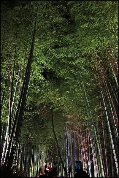 嵐山-竹林-10.JPG