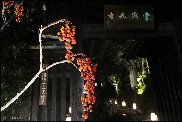 嵐山-竹林-17.JPG