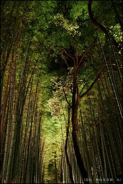 嵐山-竹林-25.jpg