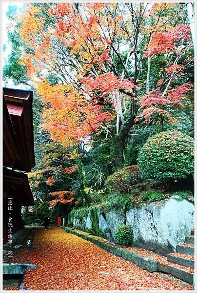 太宰府-本殿旁小徑-1.JPG