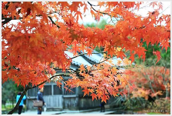 太宰府-光明禪寺-楓葉.JPG