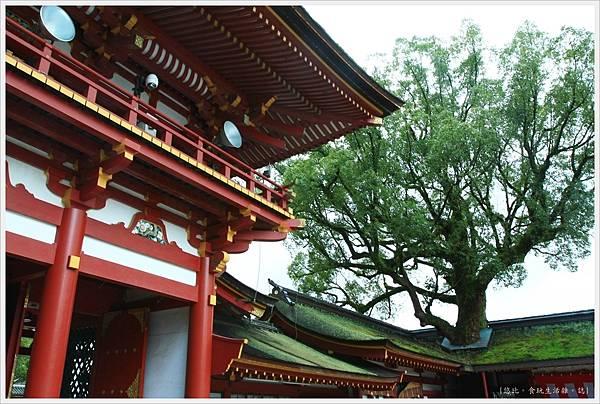 太宰府-穿頂樹-1.JPG