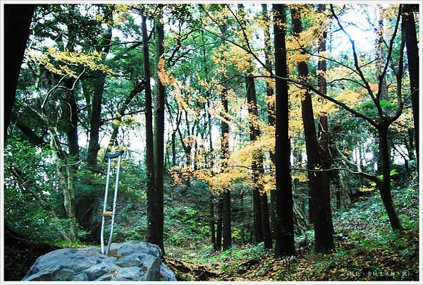 太宰府-樹林-1.JPG