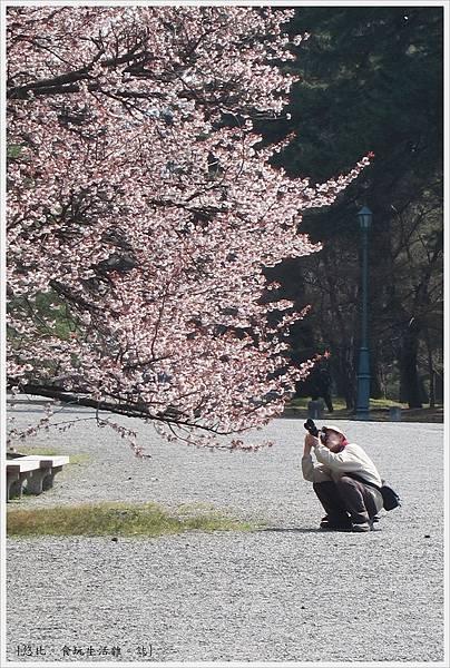 京都御苑-老人與櫻-1.JPG