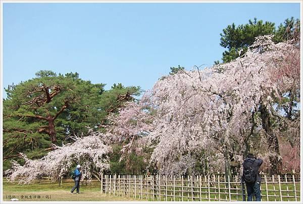 京都御苑-枝垂櫻-10.JPG