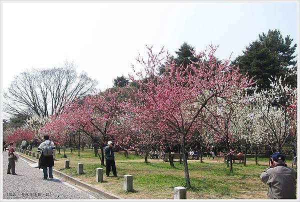 京都御苑-桃林-1.JPG