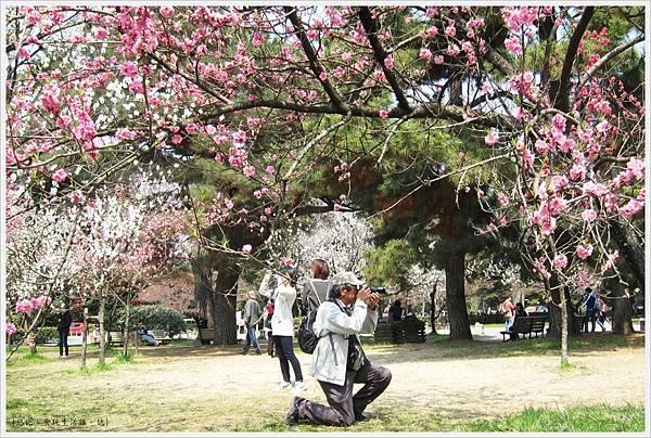京都御苑-桃林-2.JPG