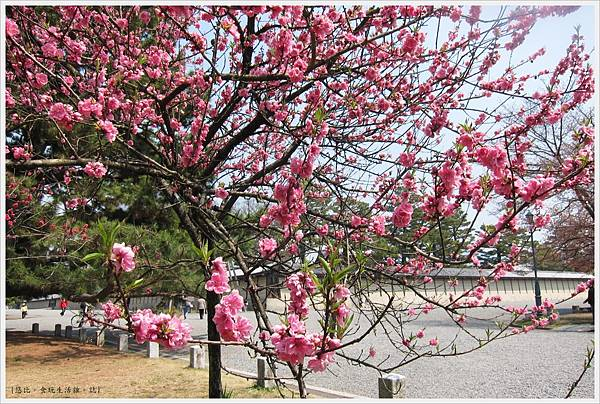京都御苑-桃花-6.JPG