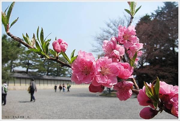 京都御苑-桃花-8.JPG