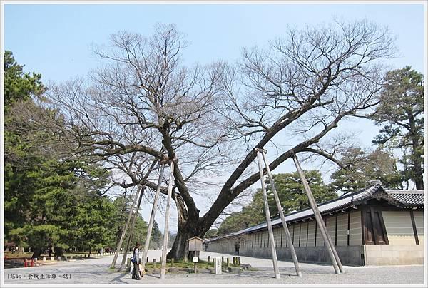 京都御苑-清水古家的椋樹.JPG