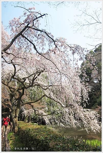 京都御苑-櫻花-2.JPG