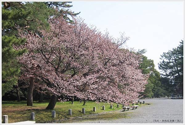 京都御苑-櫻花-7.JPG