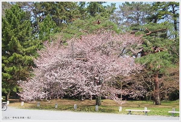 京都御苑-櫻花-10.JPG