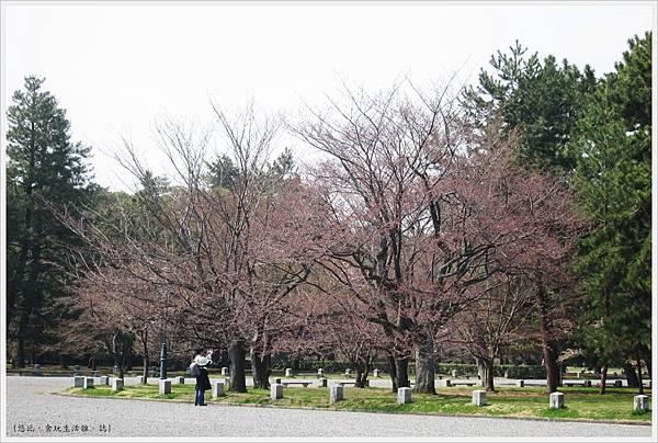 京都御苑-櫻花-11.JPG